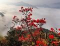 Mountain scenery in E China's Anhui