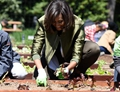 Michelle Obama plants vegetable with children in White House garden